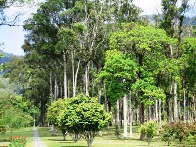 Click enlarge - eka raya botanical garden, bedugul