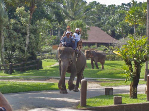Bali elephant safari tour