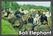 Bali Purnama Adventure - Bali Elephant